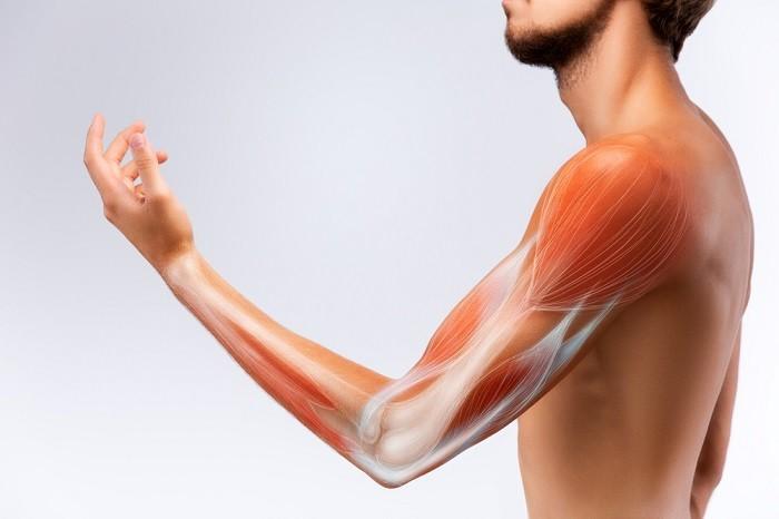 Оценка натянутой мышцы, ее лечение и профилактика.