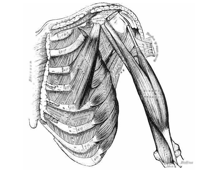 Растяжение межреберных мышц: причины, симптомы, лечение