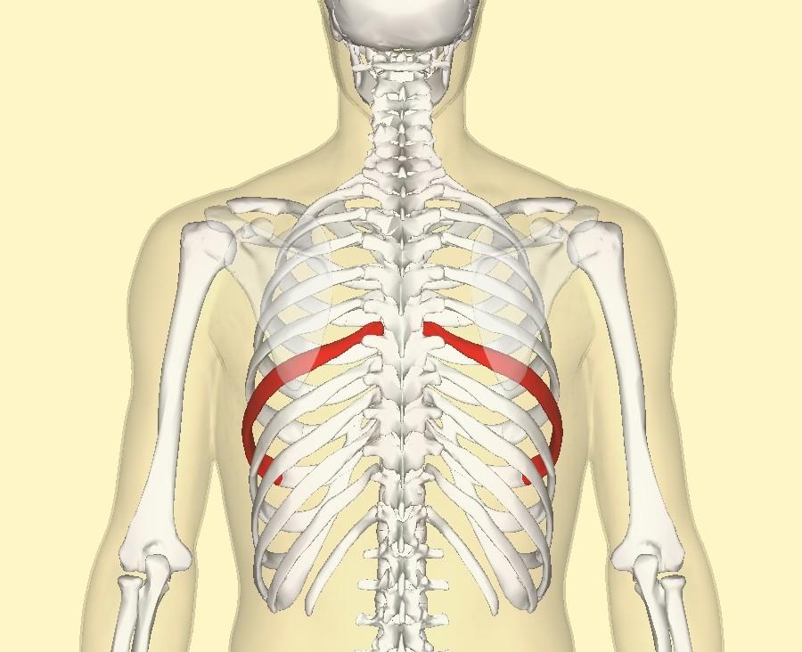 Вывих ребра: причины, симптомы, лечение и упражнения